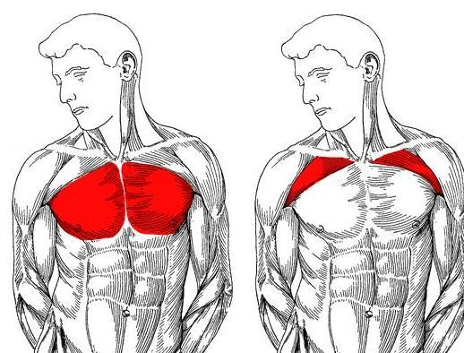 Отжиманиями можно накачать грудные мышцы?