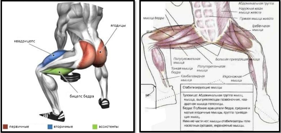 Мышцы, задействованные при приседании {amp}quot;сумо{amp}quot;